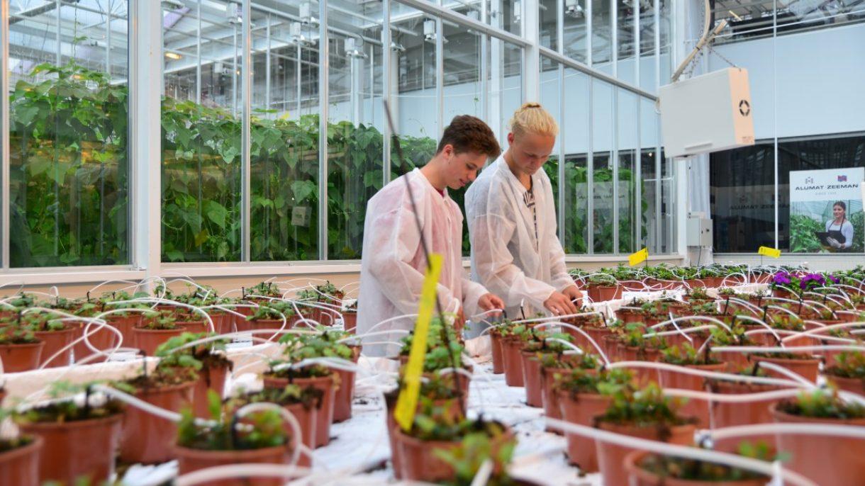 Studenten Horti Technics & Management onderzoeken planten in kas