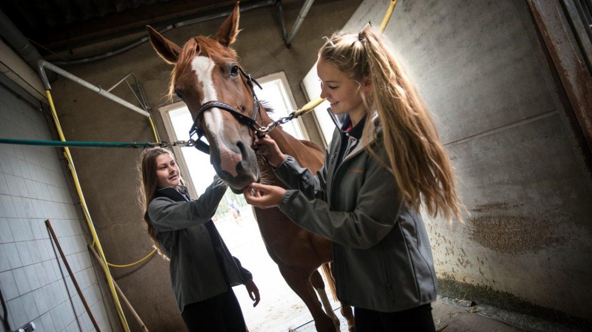 Meiden met paard op poetsplaats