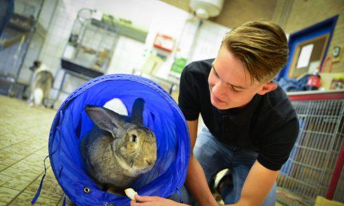 Student dierverzorging met konijn
