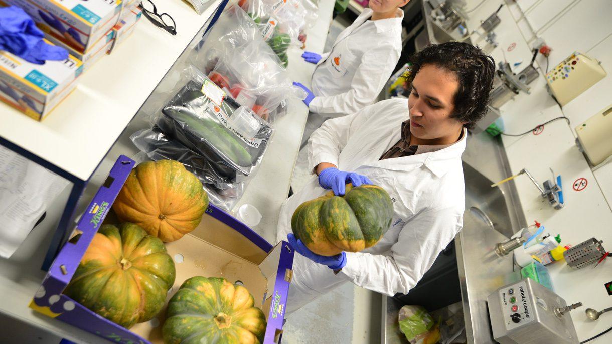Student voeding en kwaliteit onderzoekt pompoen