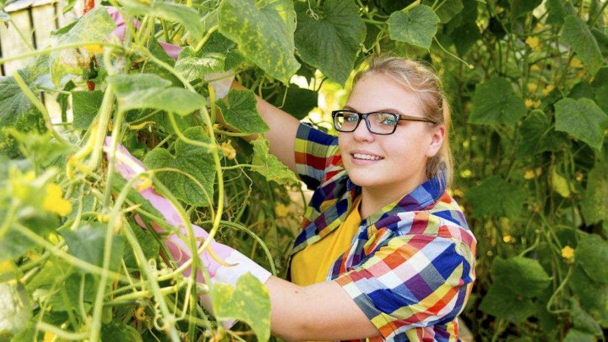 Meisje controleert planten