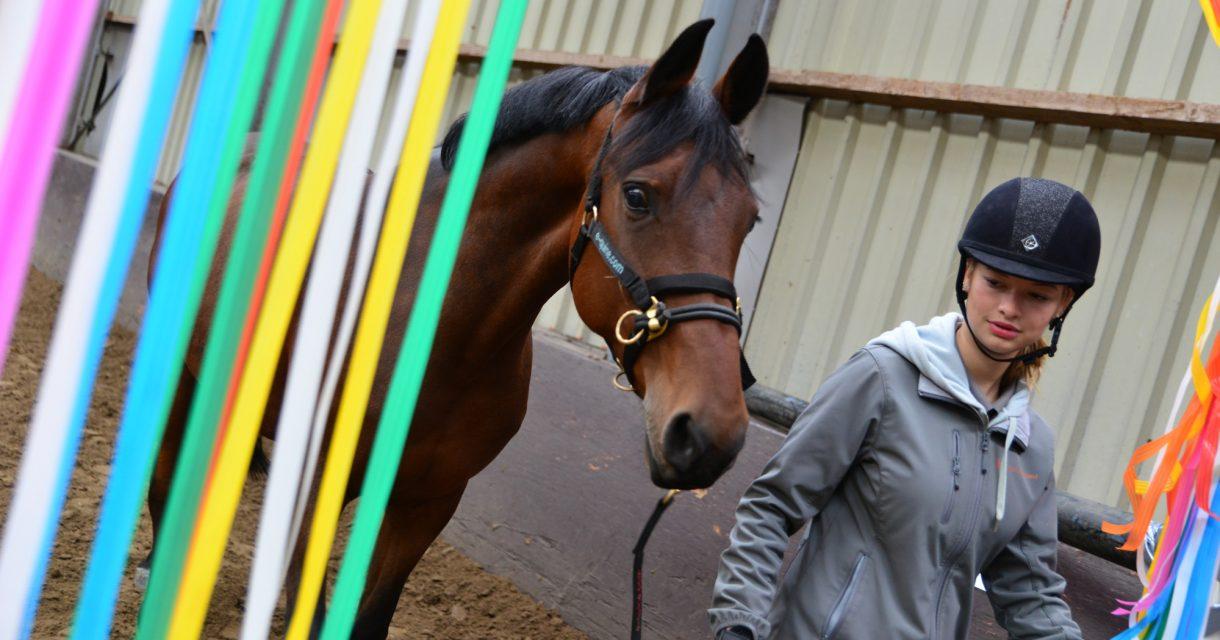 Student paardenhouderij loopt met paard door gekleurde linten