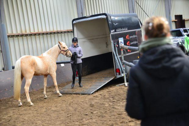 Student paardenhouderij laadt paard in trailer