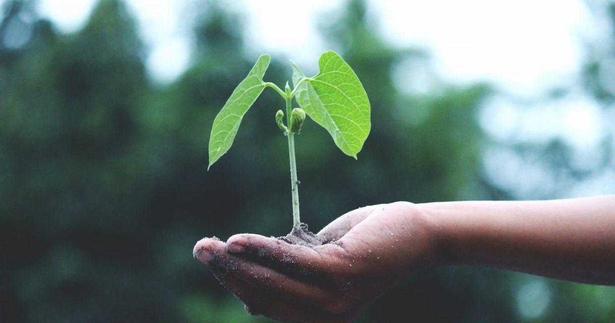 Hand met plantje erin