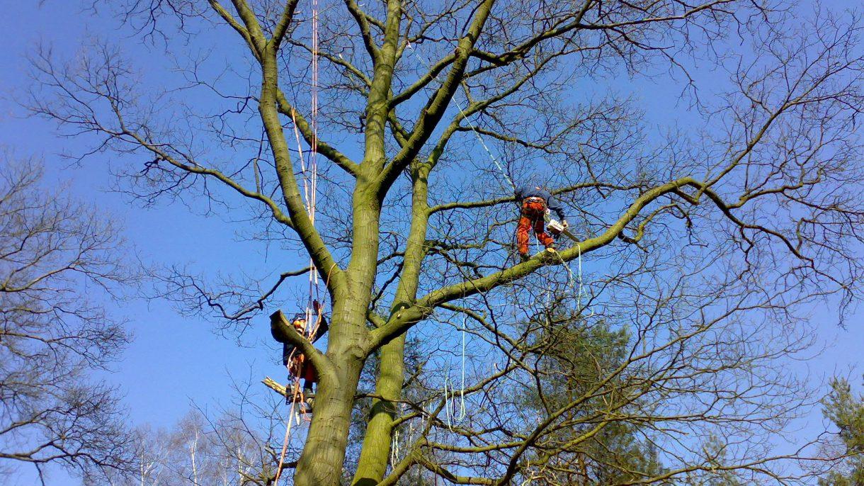 Boomverzorgers hoog in boom