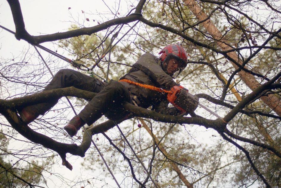 Boomverzorger zaagt boom af hoog in boom