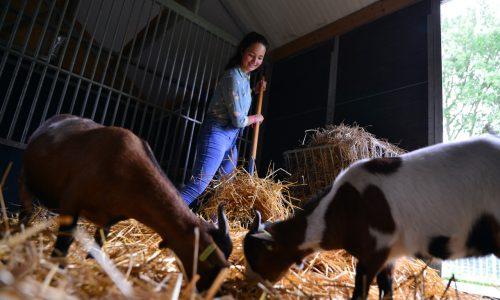 Student Dierverzorging met geiten