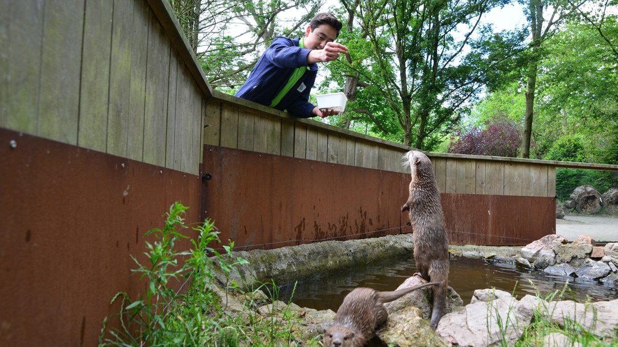 Dierverzorging Otter