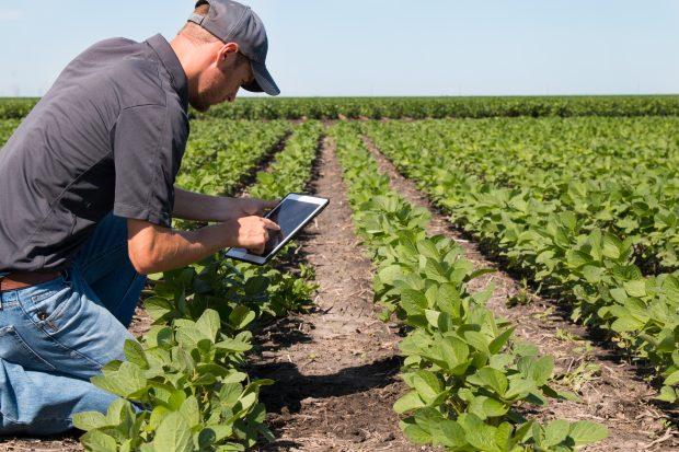 Boer bekijkt gewas en controleert met behulp van tablet