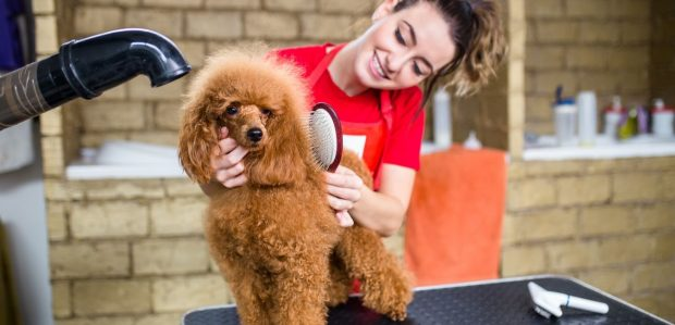 hond op trimtafel - hondentrimmen