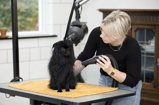 hond trimmen op tafel - hondetrimmen in garage