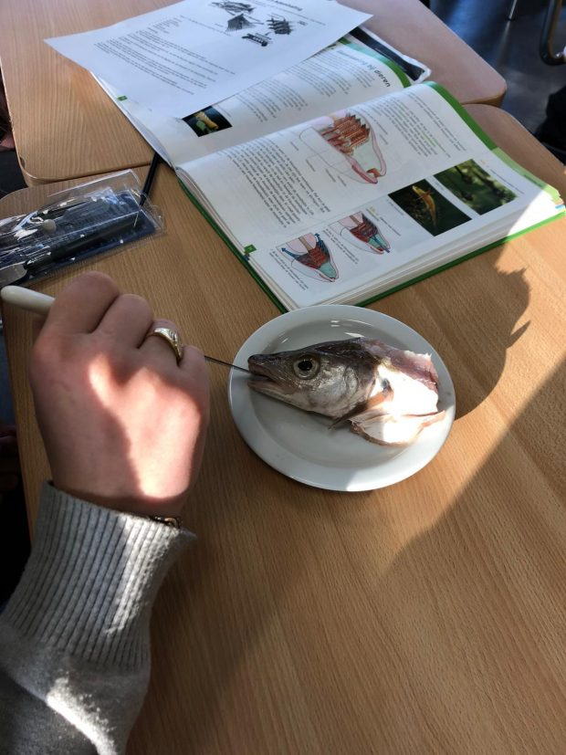 Practicum kieuwen van de vis